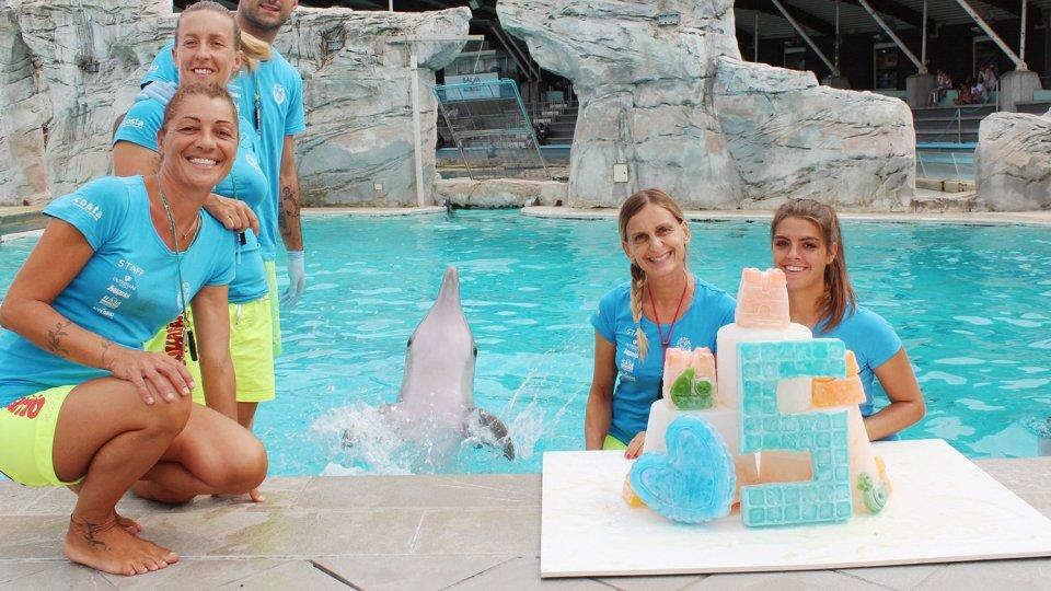 Castelli, paperelle e cuori colorati per taras il delfino oggi ha compiuto 5 anni con una maxi torta di ghiaccio