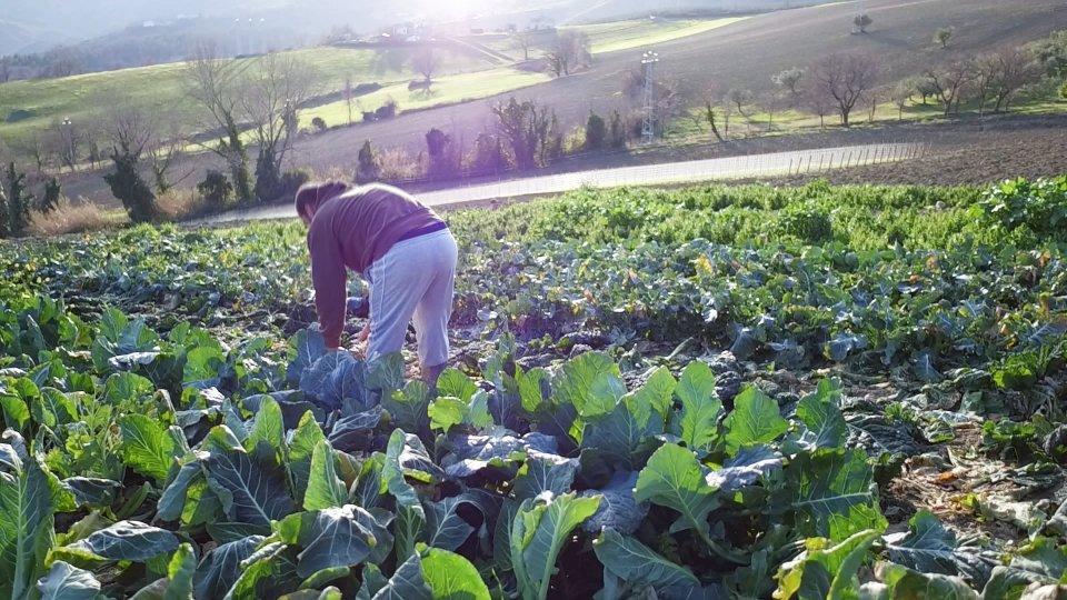 Un'azienda agricola a Faetano
