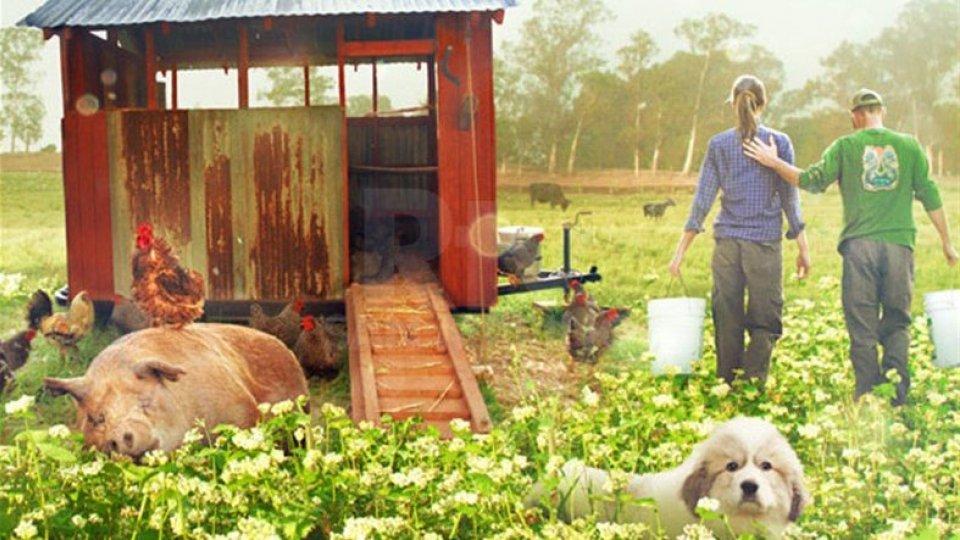 """Arriva al Settebello """"The biggest little Farm"""""""