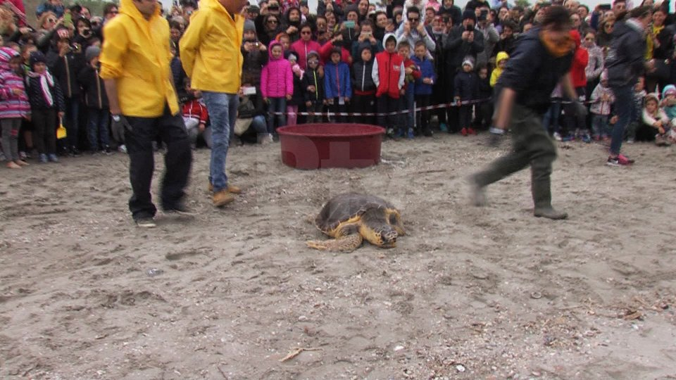 Il rilascio di una tartaruga a Riccione