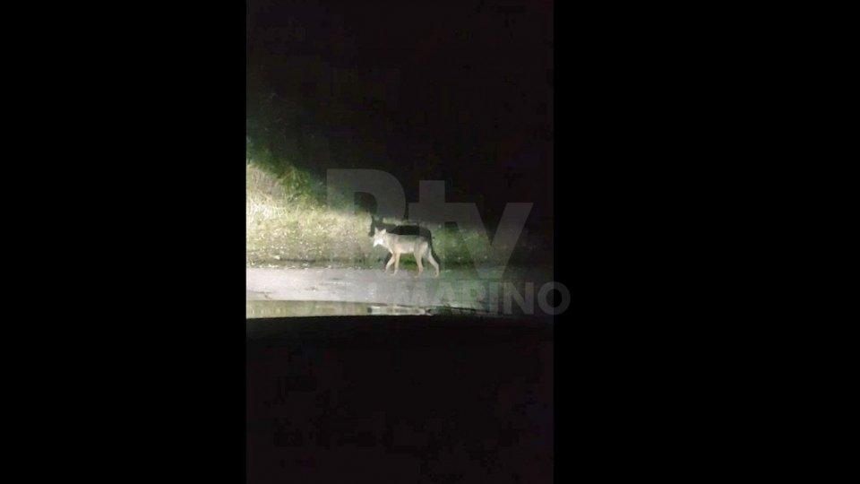 Video di Alberto Macina