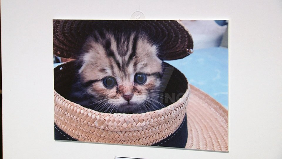 """""""Scatto animale"""" mette alla prova fotografi in erba"""