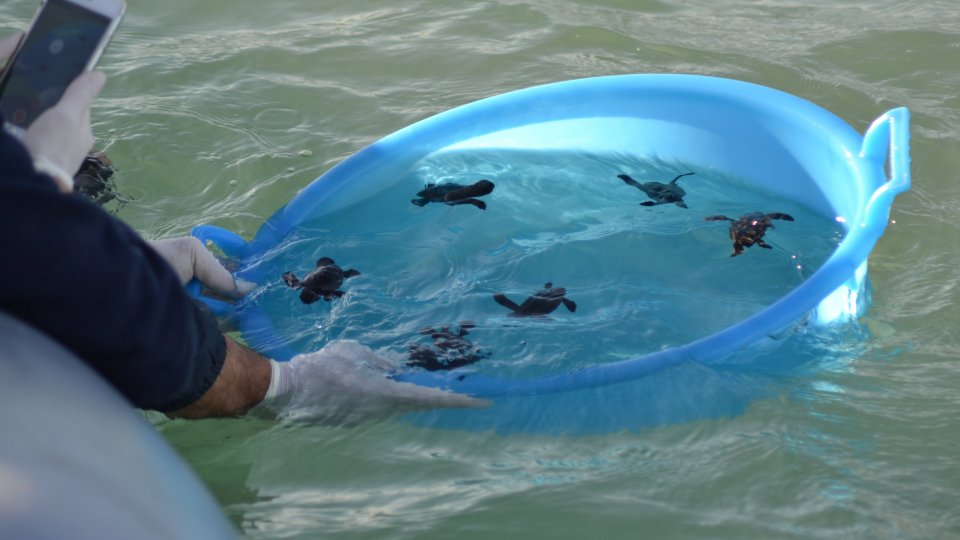 Fondazione Cetacea: liberati sei piccoli di tartaruga