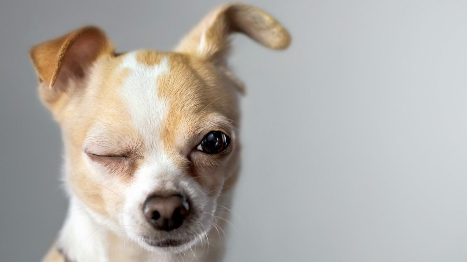 Gestire i litigi fra i cani