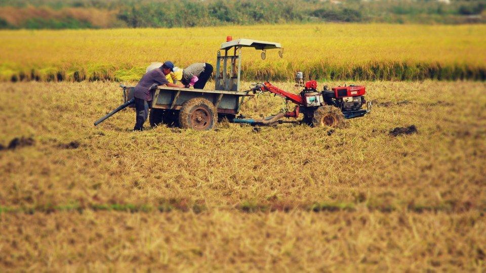 Lavori agricoli. Foto archivio @pixabay