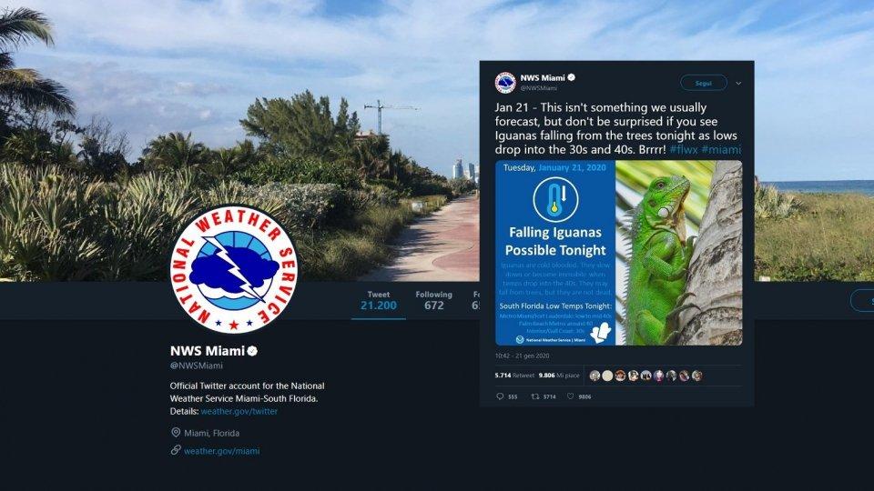 Previsioni meteo: Allerta caduta iguane in Florida!
