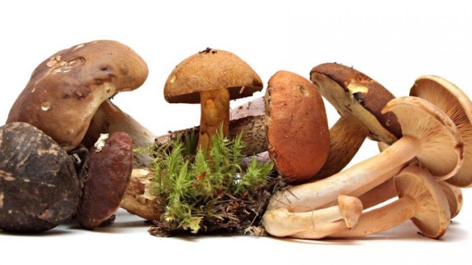 Torta di funghi con pane in cassetta e mozzarella di lenticchie, la ricetta veg di Carla Casali