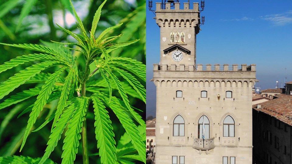 Una pianta di Cannabis e Palazzo Pubblico