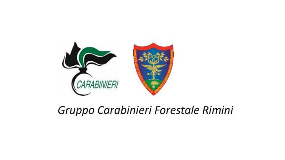 """Forestale Rimini: """"Vietate le focheracce"""""""