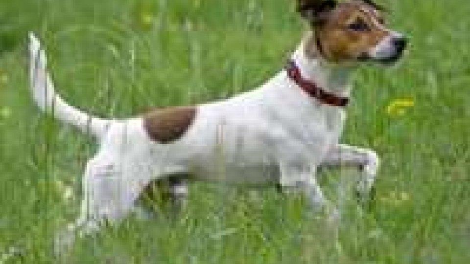 Cane ucciso a Rimini, sarebbe ritorsione nel mondo dell'ippica