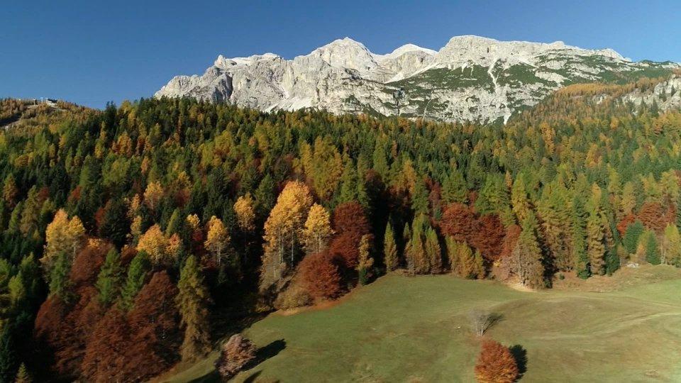 21 marzo: la Giornata mondiale delle Foreste, in Italia boschi in aumento