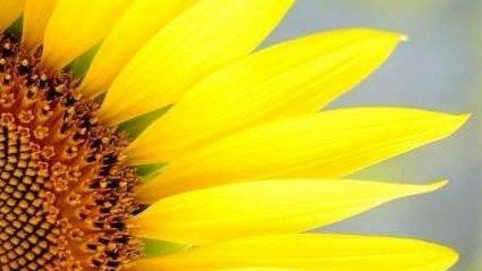 Coronavirus: Agrigarden devolve 2500 euro alla Protezione Civile