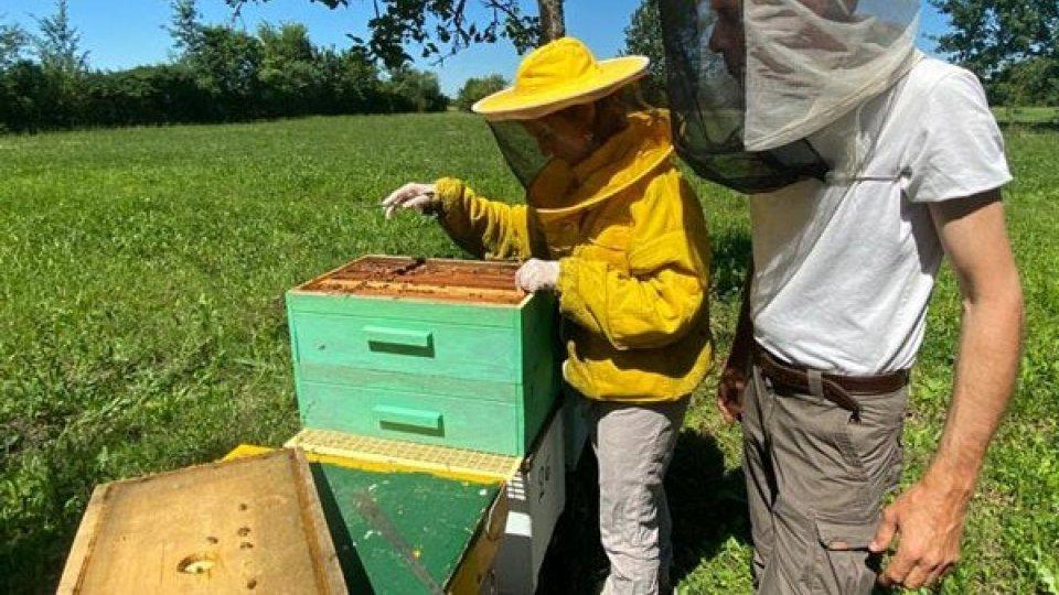 """""""Miele 'made in China' mette in ginocchio apicoltura di qualità"""" L'allarme lanciato da Cia-Agricoltori Italiani che segnala un mercato invaso da prodotto adulterato importato a prezzi bassi"""
