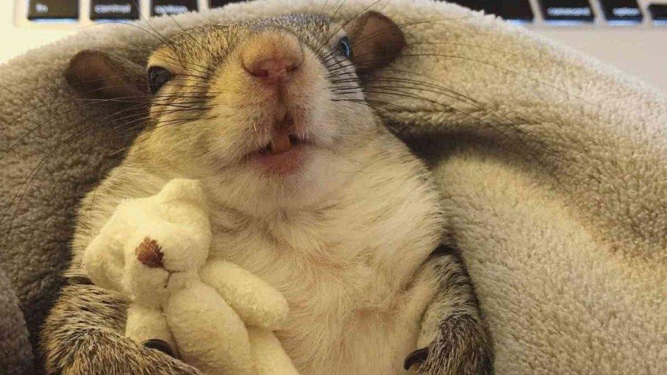 Lo scoiattolo che dorme con l'orsacchiotto