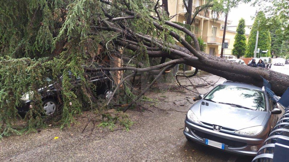 Rimini: cade un albero sulla strada, tre auto danneggiate