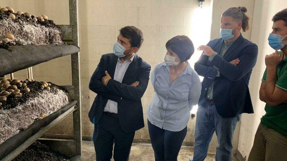 Agricoltura e pesca, l'assessore Mammi visita le filiere 'Made in Rimini'