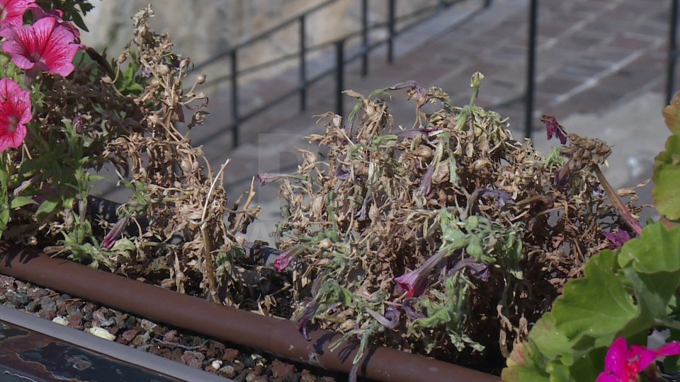 Cava dei Balestrieri: nessun atto vandalico, irrigazione alle fioriere rimasta bloccata per una dimenticanza