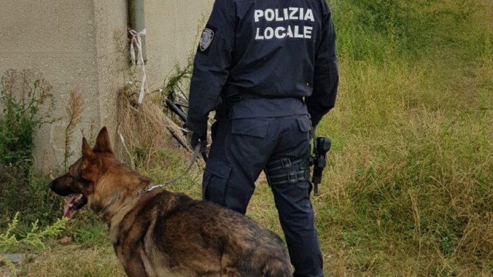 Polizia locale di Rimini: nove gli arresti, 450 grammi di cocaina, 123 di eroina, 4 chili di marijuana, 55 grammi di hashish i risultati nei primi otto mesi del 2020 nell'attività di contrasto allo spaccio di stupefacenti