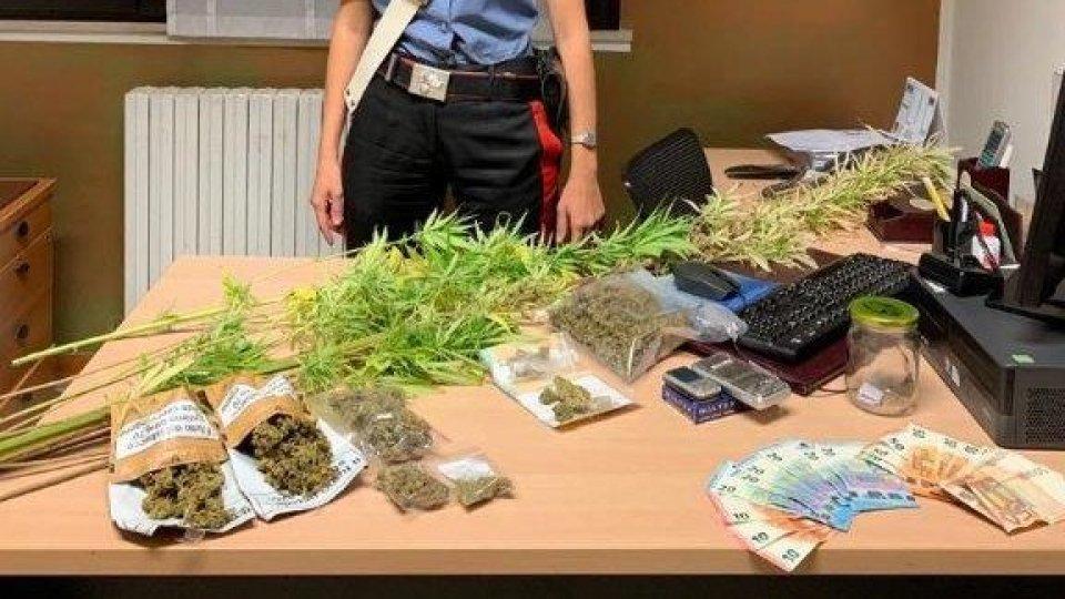 """Uniti dall'amore per il """"pollice verde"""". A San Giovanni in Marignano arrestata coppia di pusher coltivatori"""