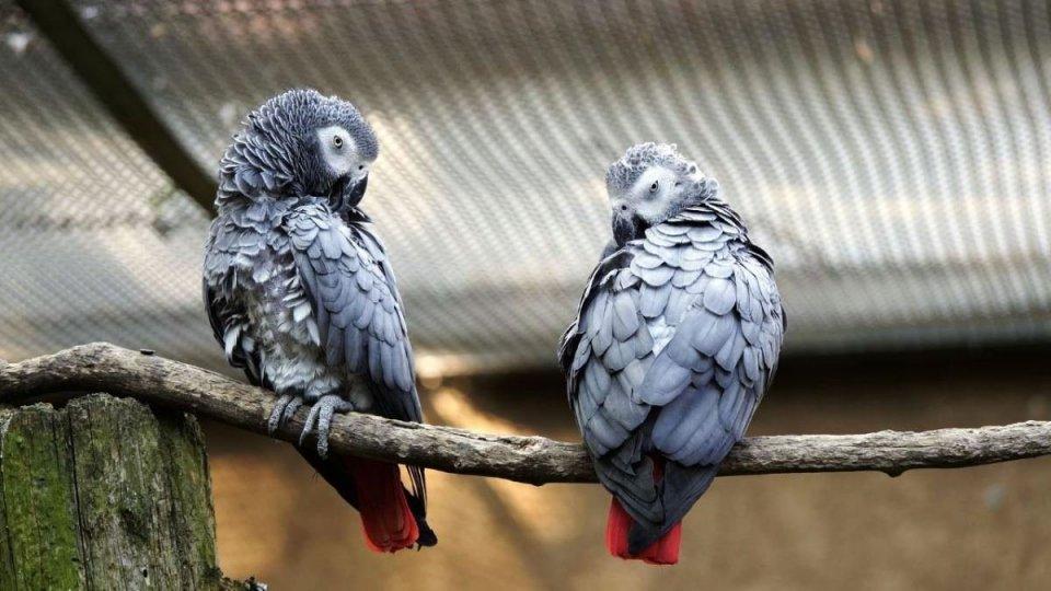 Insultano i visitatori: rimossi dallo zoo