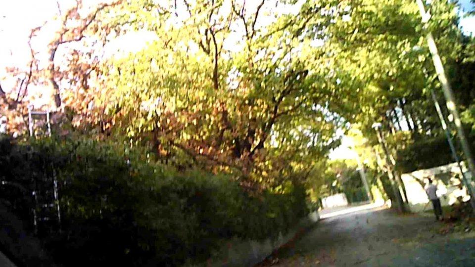 Misano: 72 enne cade dall'albero, grave agli Infermi di Rimini