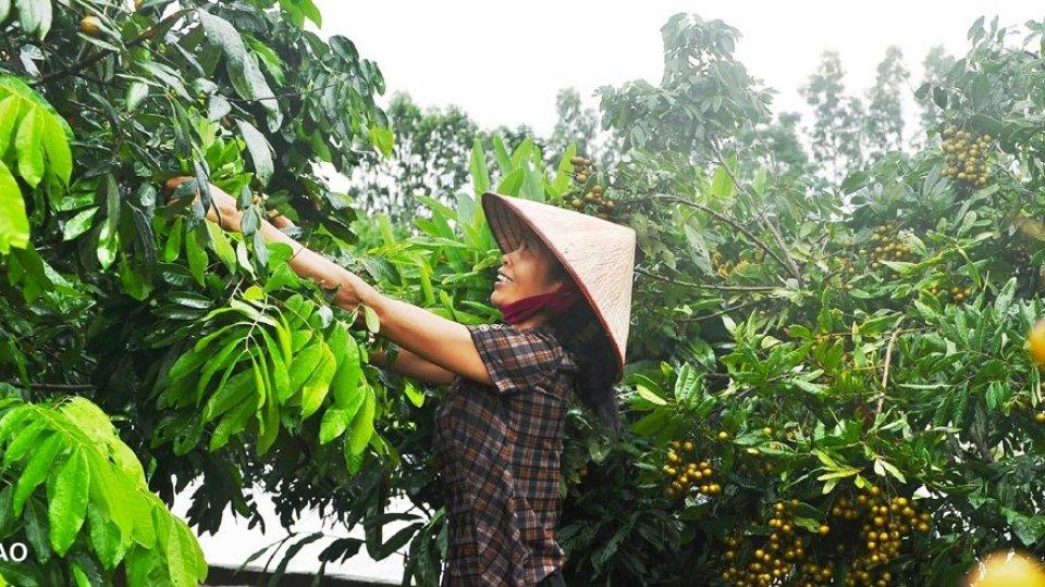 La Segreteria di Stato per gli Affari Esteri si unisce alle celebrazioni della Giornata mondiale dell'alimentazione