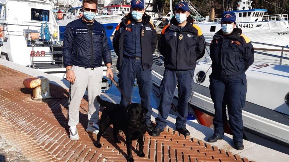 Rimini: la Guardia Costiera salva un Labrador allontanatosi in mare