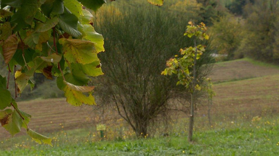 La Repubblica di San Marino celebra la prima giornata nazionale dell'albero