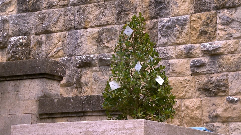 Taglio del nastro per l'Albero delle Parole Gentili. Un simbolo per fermare la violenza sulle donne