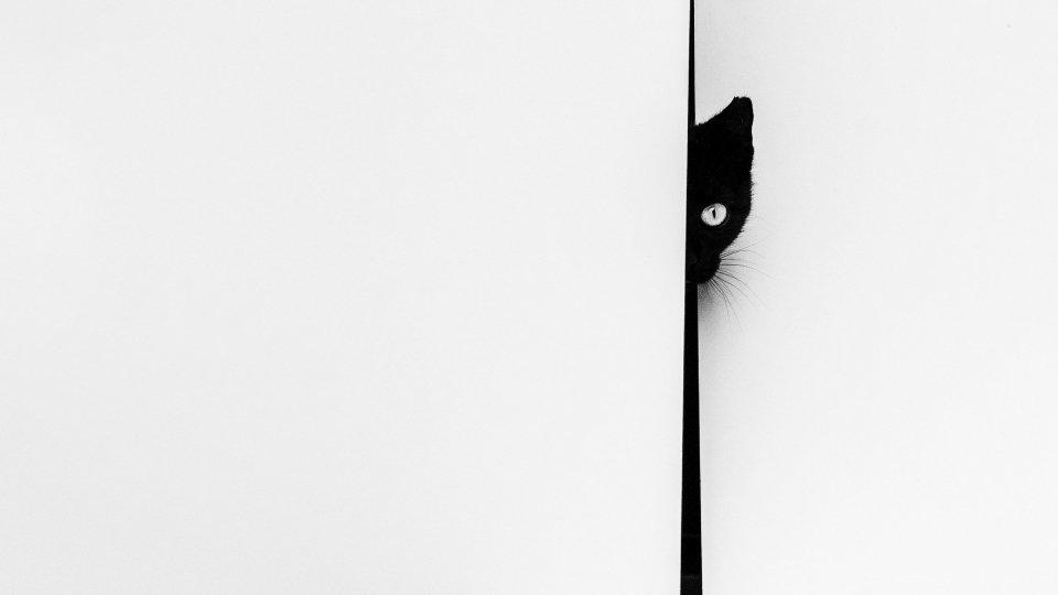 A.S.F.A.: Giorgio Busignani vince il Concorso Fotografico Sociale 2020