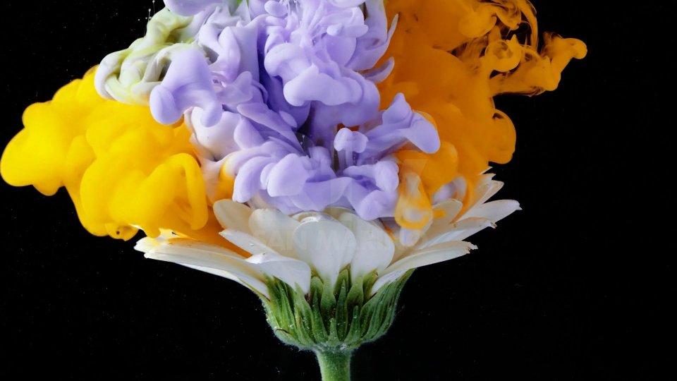 I fiori di Emilie Grange nel suo cortometraggio