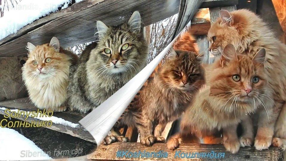 La fattoria che ospita un milione di gatti