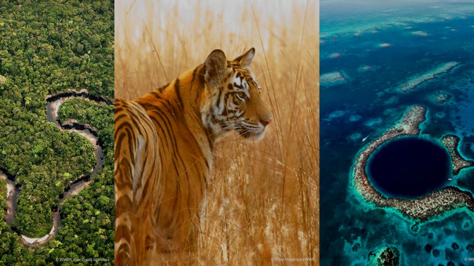 Wwf compie 60 anni: la sfida contro crisi clima e biodiversità ancora aperta