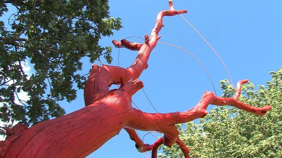 Usl e Ucs: inaugurato l'albero rosso a Montecerreto