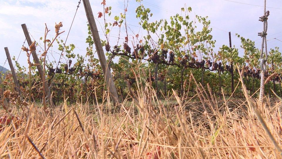 """Caldo e afa almeno fino a venerdì; giugno """"secco"""" in Romagna con -77,5% di precipitazioni"""
