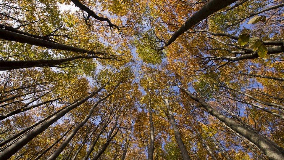 La natura ci cura con la Terapia Forestale