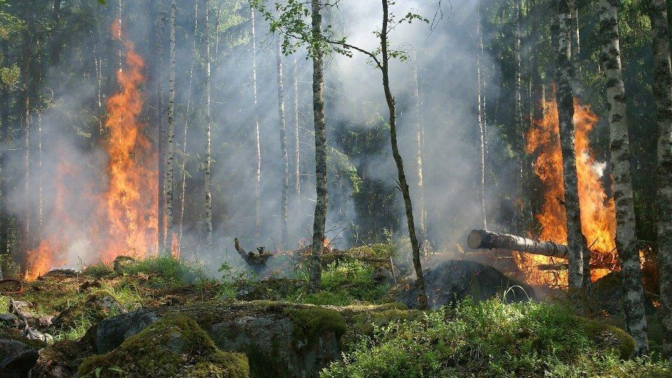 Protezione civile. In Emilia-Romagna ancora alto il rischio di incendi boschivi, prorogato fino al 29 agosto lo stato di 'grave pericolosità'