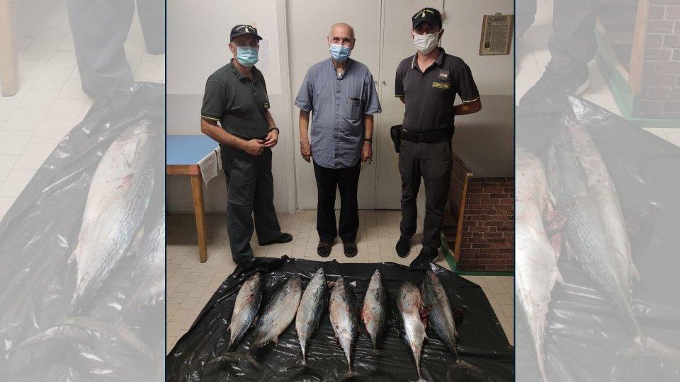 GdF Rimini: sequestrati 40 chili di tonno, poi donati alla Caritas