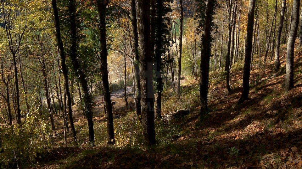 I boschi di Ridracoli (foto archivio)