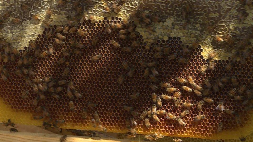 Sos degli Apicoltori: quasi azzerata la produzione di miele 2021
