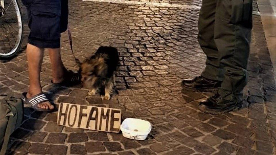 Sequestrato cucciolo sfruttato per accattonaggio