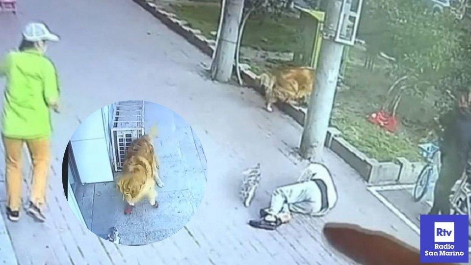Gatto cade in testa a un uomo, subito soccorso da un cane con le scarpe