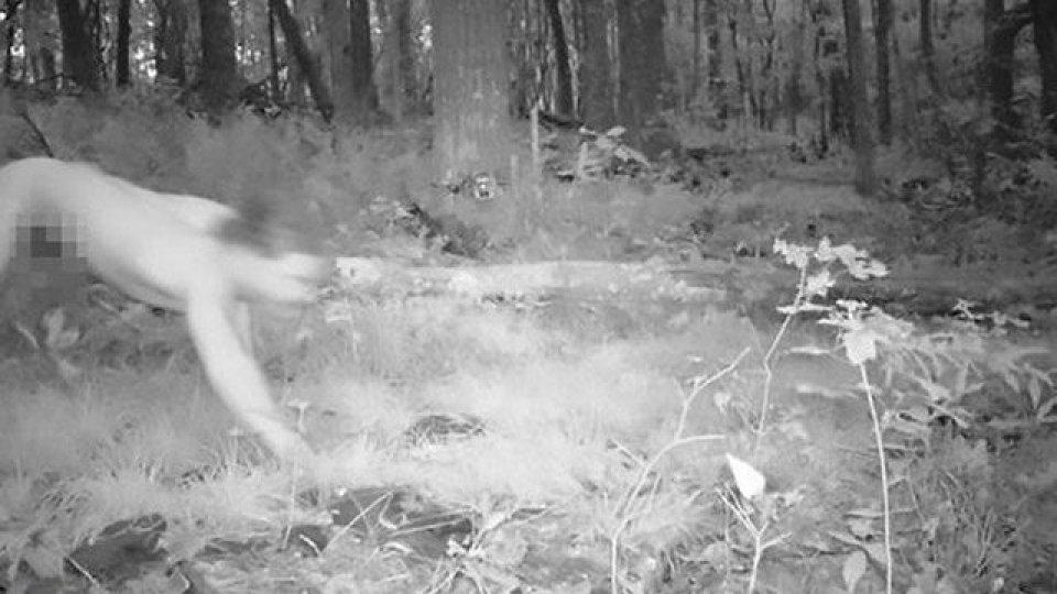 Telecamera nascosta nella foresta, cattura l'uomo tigre nudo