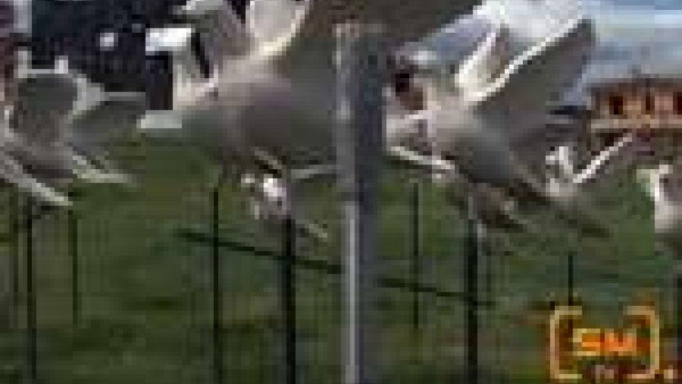 San Marino - Rotonda dell'ospedale ancora presa di mira: due colombe rubate in 10 giorni