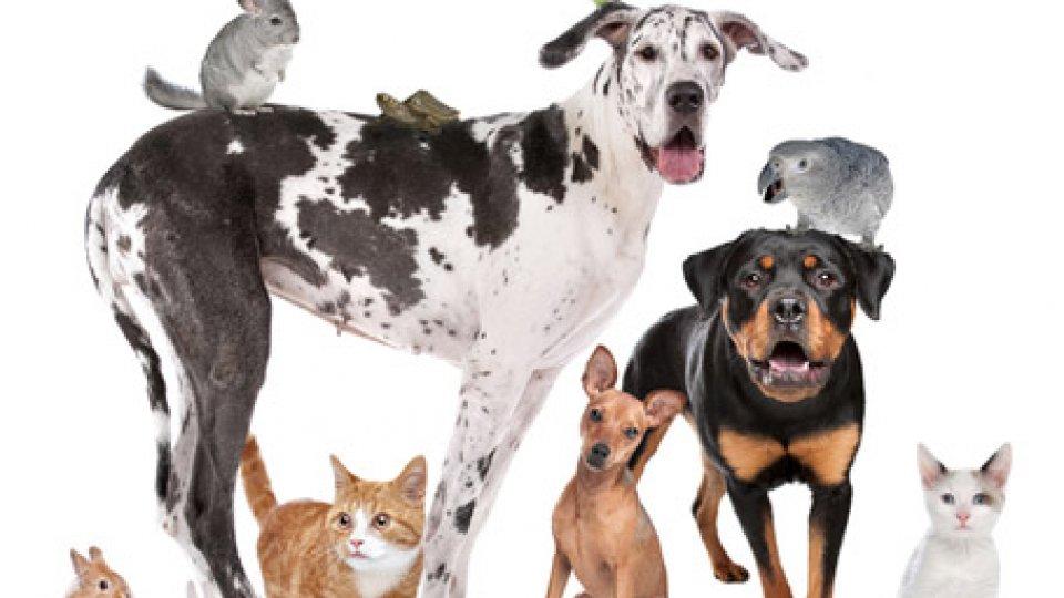 4 ottobre: Giornata Mondiale degli animali