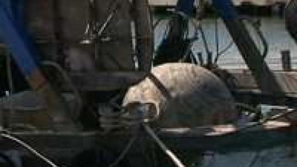 Peschereccio recupera mina con reti, evacuato porto di RiminiPeschereccio recupera mina con reti, evacuato porto di Rimini