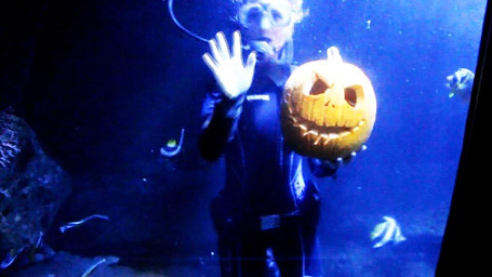 Jack O Lantern all'acquario di CattolicaZombie, squali e wallaby. I parchi divertimento dell'Emilia Romagna si travestono per Halloween