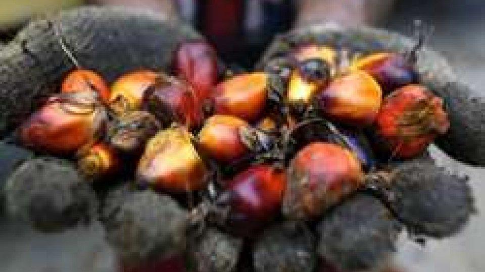 Frutti della palma, ph Ansa/Epa