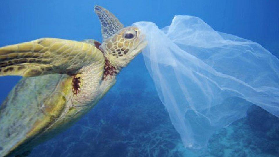 "Plastica monouso, WWF: ""Italia sia apripista"""