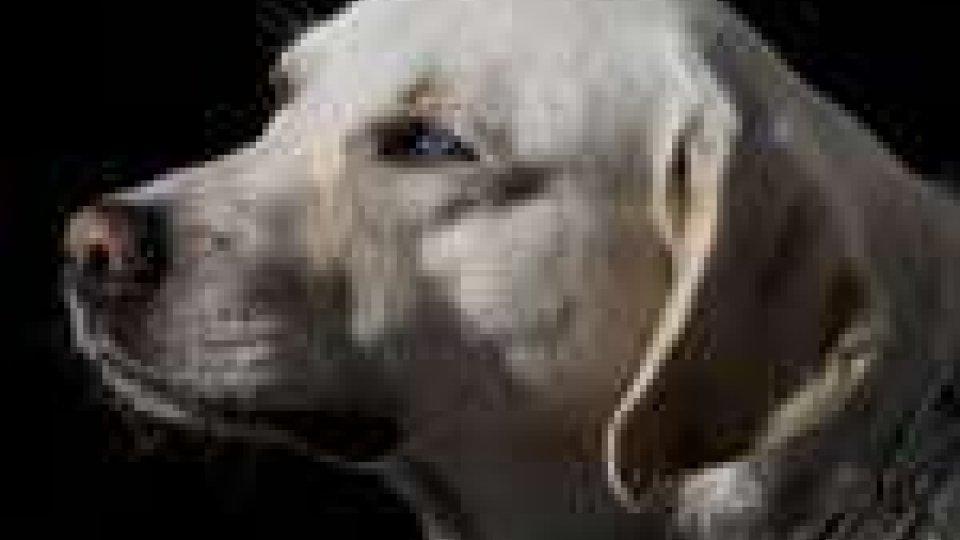 Episodio di inciviltà a Gualdicciolo: qualcuno ha sparato contro due cani